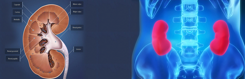 Urology Hospital Delhi
